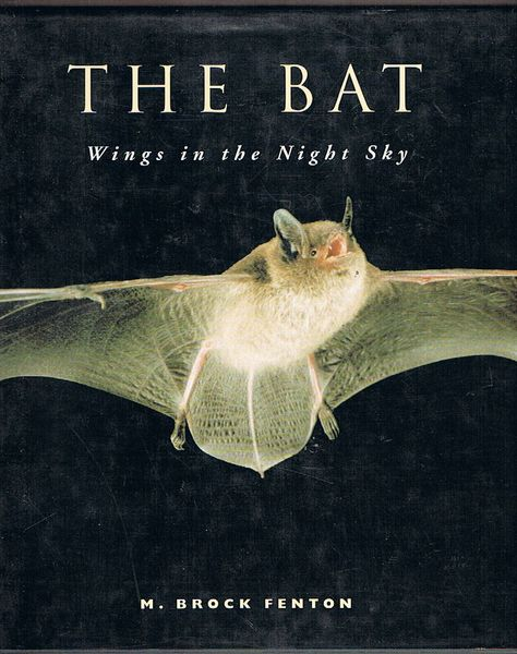 The Bat: Wings in the Night Sky
